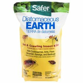What kills bed bugs? Diatomaceous earth