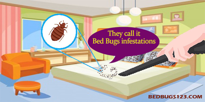bed bugs infestations forever