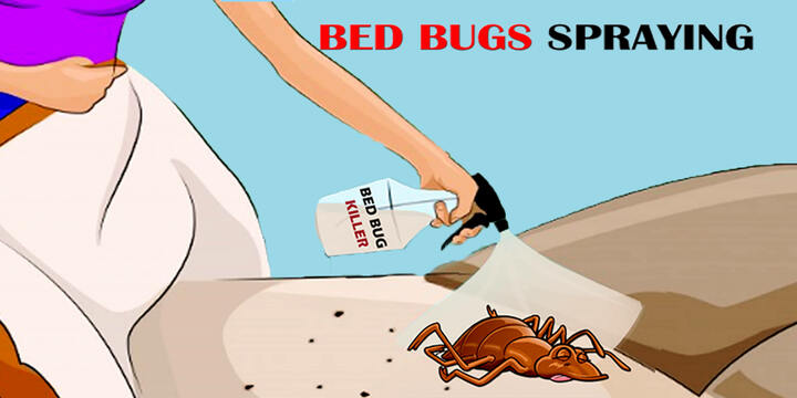 bed bug spraying