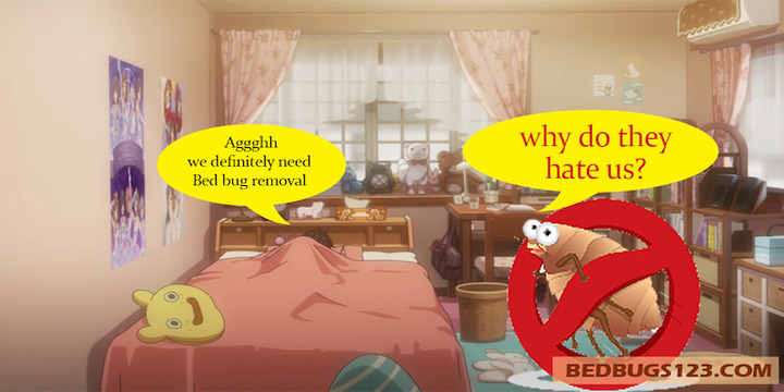 bed bug removal 100%