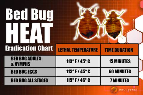 Heat. What temperatures kill bed bugs?