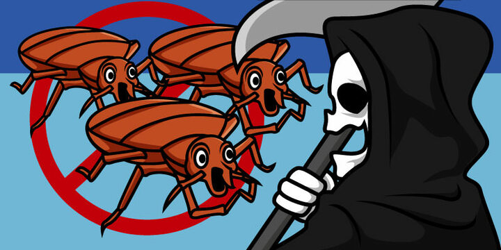 how to kill bed bug easy