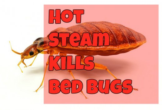What temperatures kill bed bugs? Steam