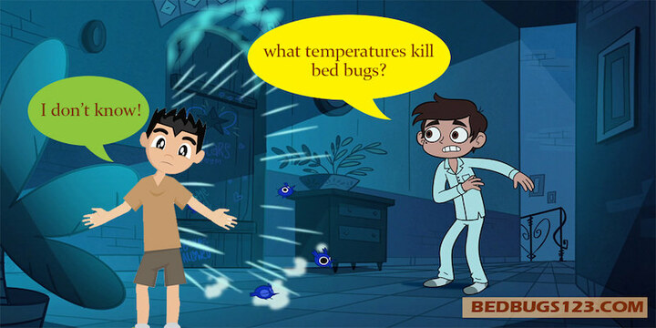 what temperatures kill bed bugs fast