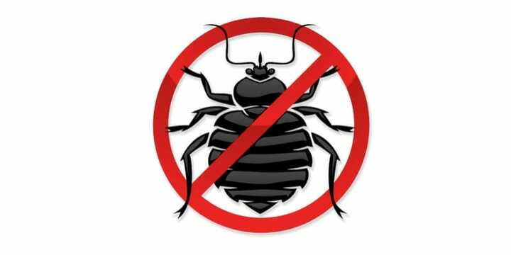 bedbugs products reviews