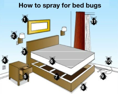 how to spray for bed bugs